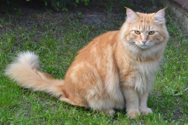 Kotylion Z Miłości Do Kotów Blog Archive Zaginął Rudy Kot