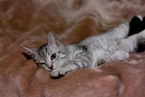 bywam rozkoszny jak śpięm