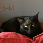 Basia_i_Czesia
