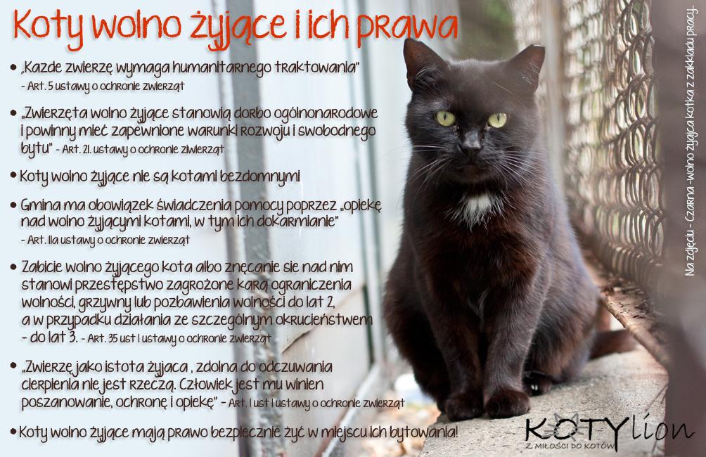 prawa kotow wolno zyjących
