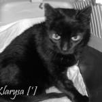 Klarysa