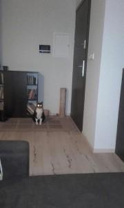 kot - oryginał