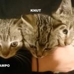 SAMPO-KNUT-MILO