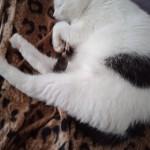 zabka (2)